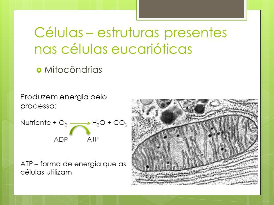 Células – estruturas presentes nas células eucarióticas