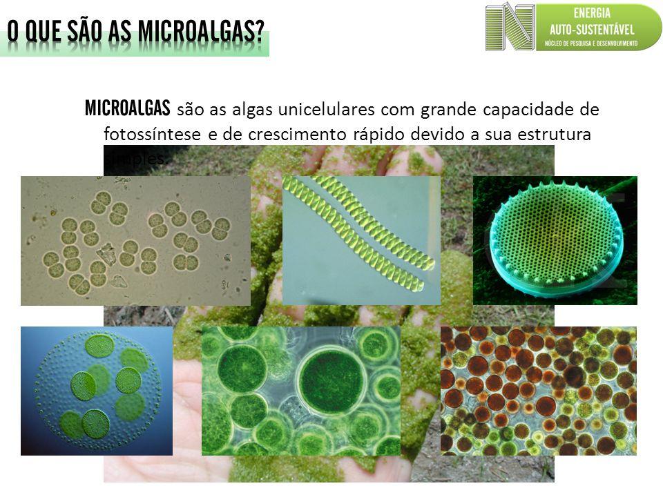 O QUE SÃO AS MICROALGAS