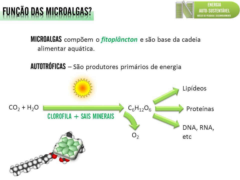 FUNÇÃO DAS MICROALGAS MICROALGAS compõem o fitoplâncton e são base da cadeia alimentar aquática. AUTOTRÓFICAS – São produtores primários de energia.