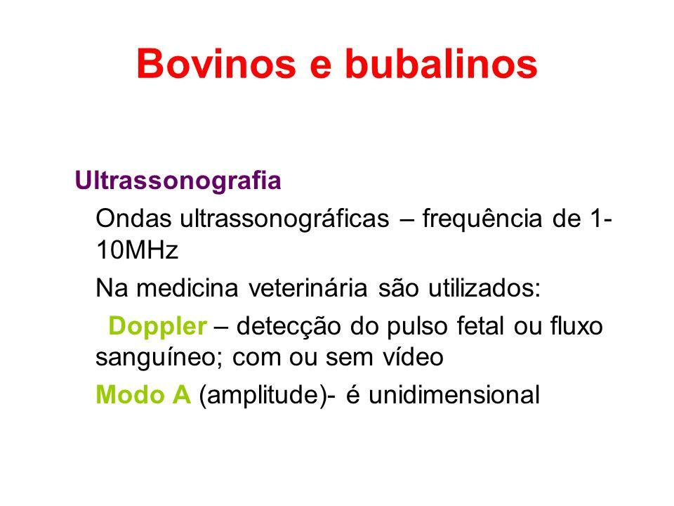 Bovinos e bubalinos Ultrassonografia