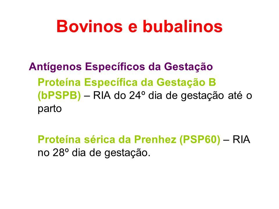 Bovinos e bubalinos Antígenos Específicos da Gestação