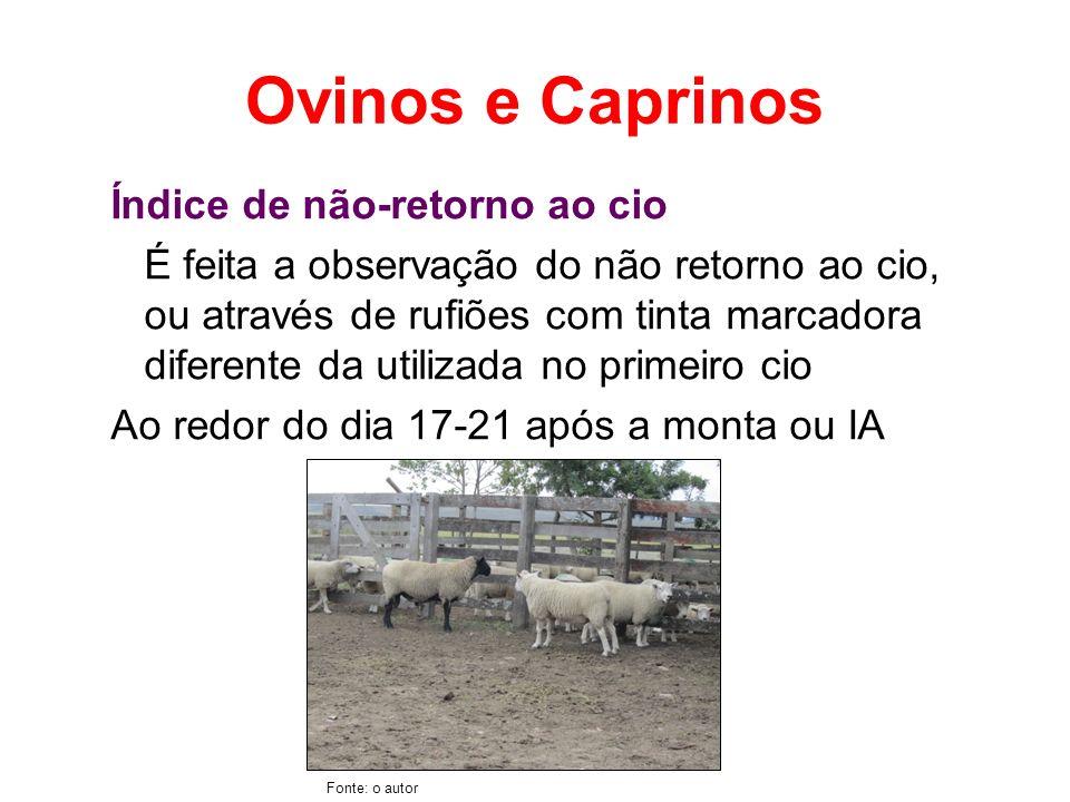 Ovinos e Caprinos Índice de não-retorno ao cio