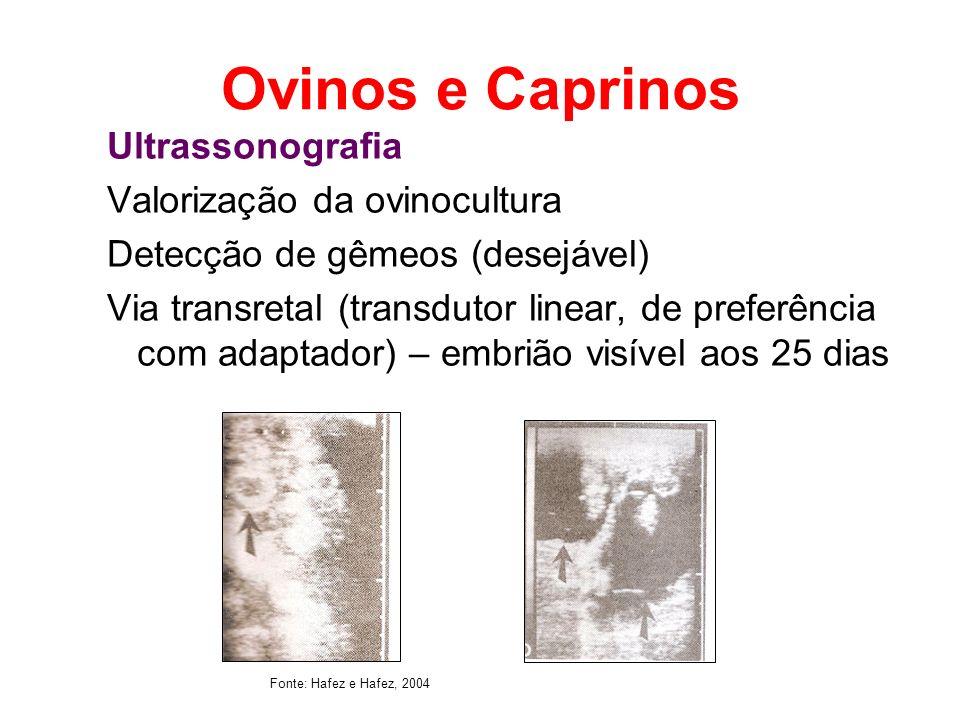 Ovinos e Caprinos Ultrassonografia Valorização da ovinocultura