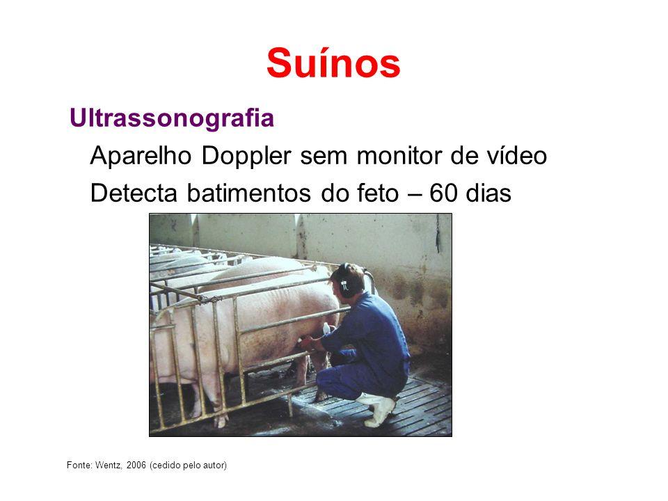 Suínos Ultrassonografia Aparelho Doppler sem monitor de vídeo