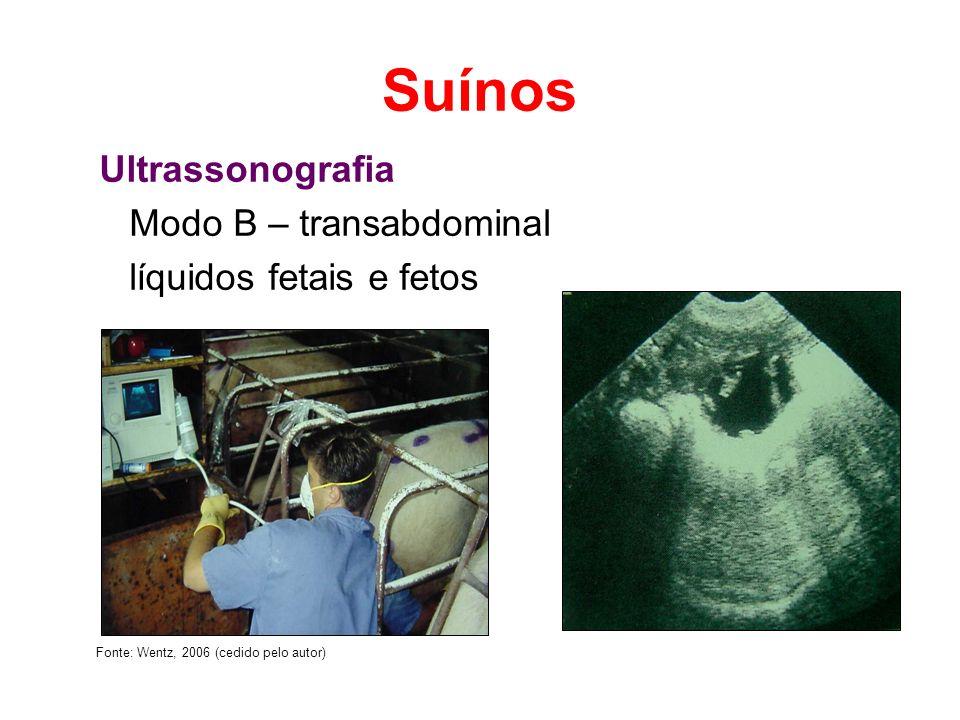 Suínos Ultrassonografia Modo B – transabdominal