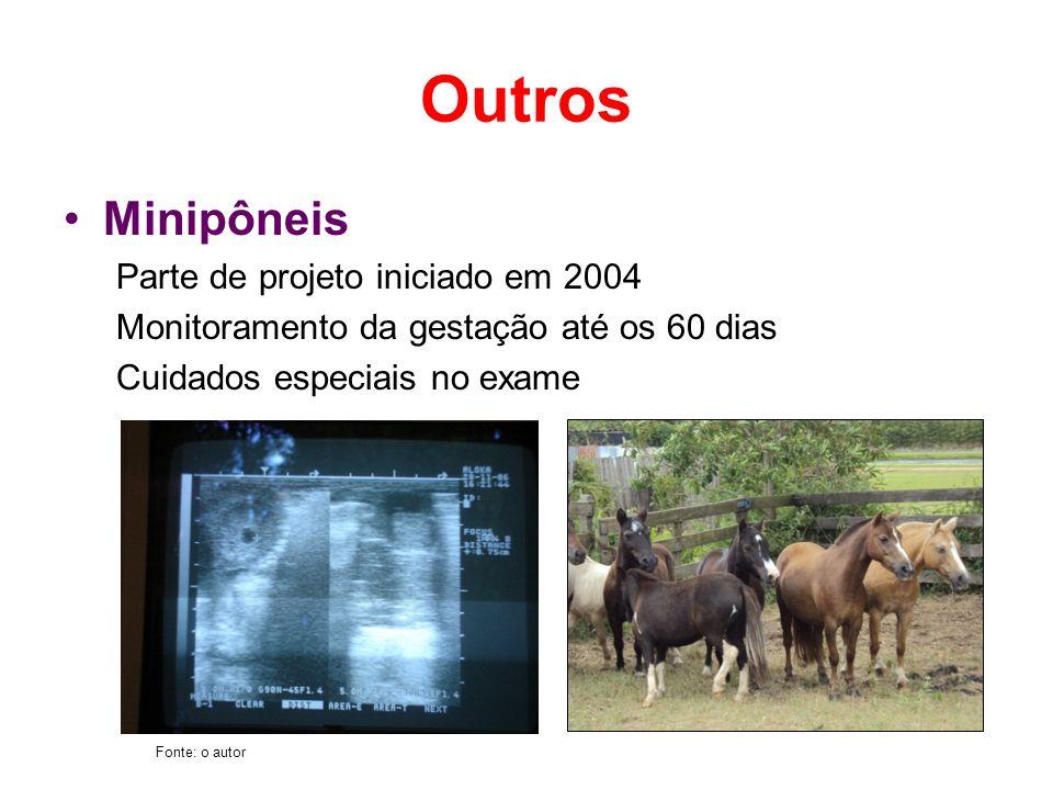 Outros Minipôneis Parte de projeto iniciado em 2004