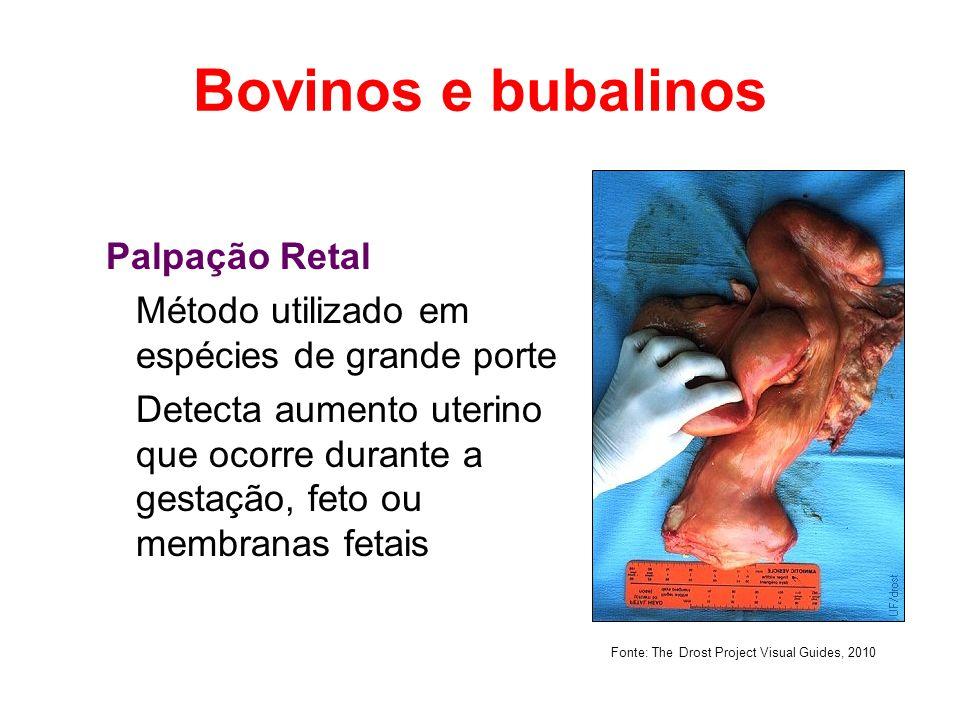Bovinos e bubalinos Palpação Retal