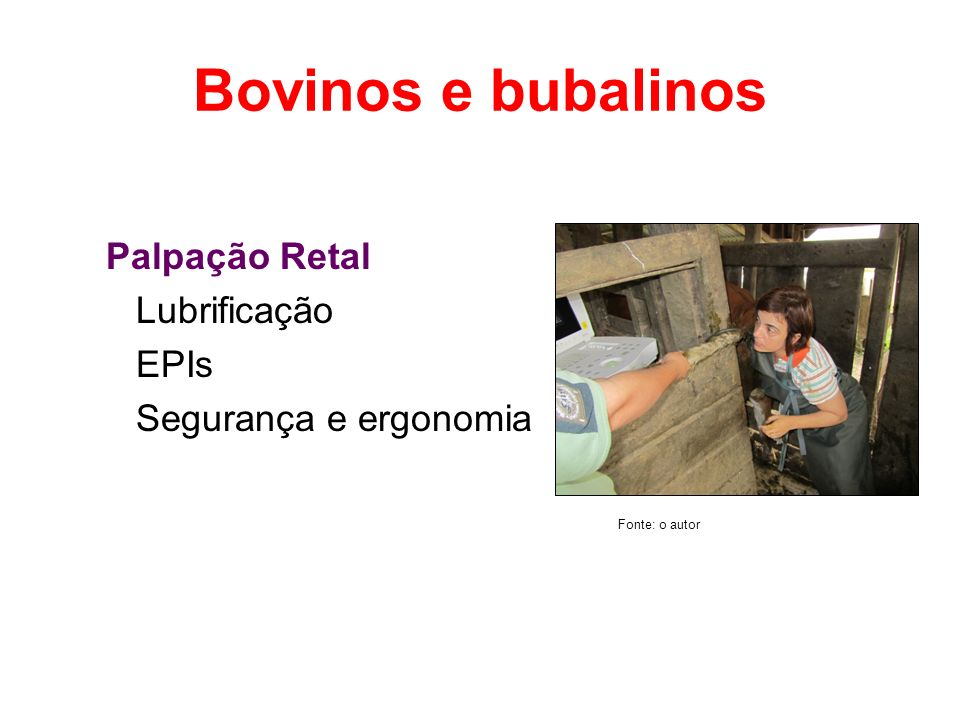 Bovinos e bubalinos Palpação Retal Lubrificação EPIs