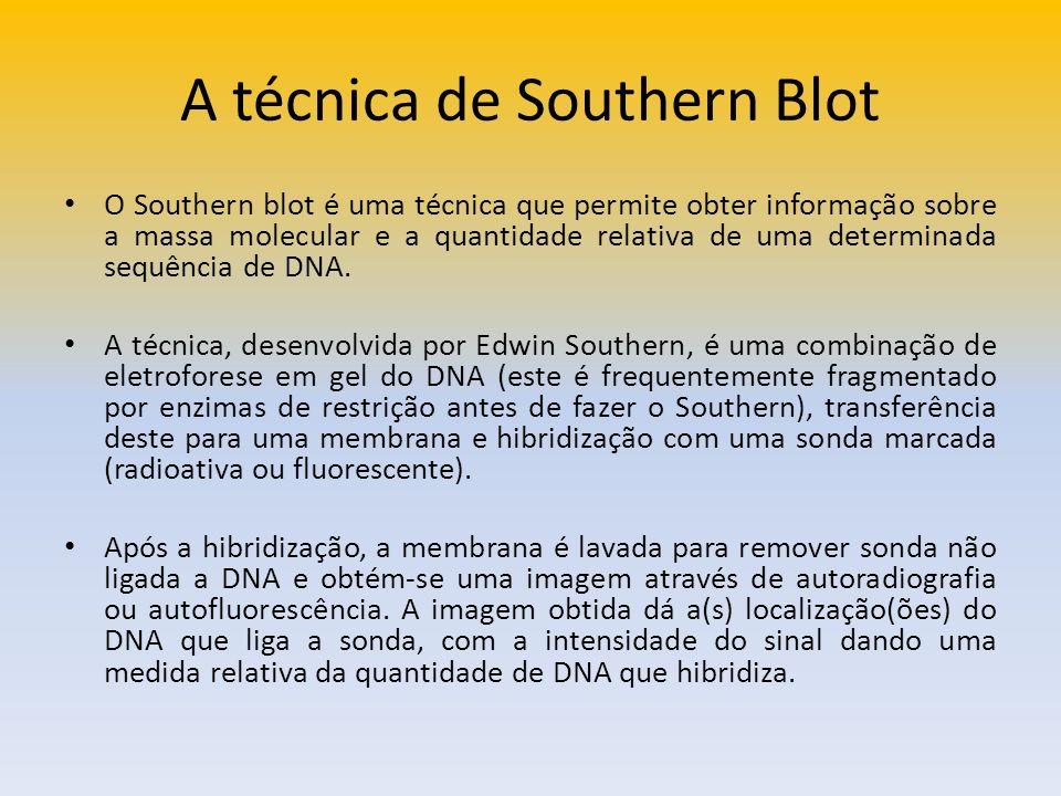 A técnica de Southern Blot