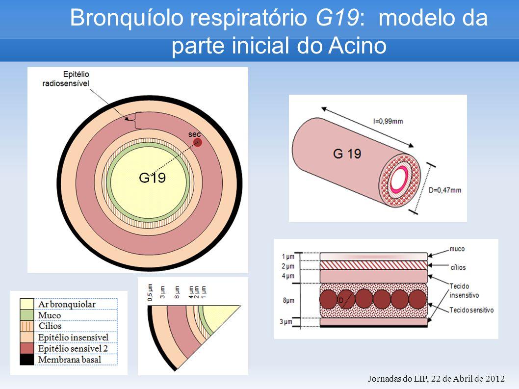 Bronquíolo respiratório G19: modelo da parte inicial do Acino