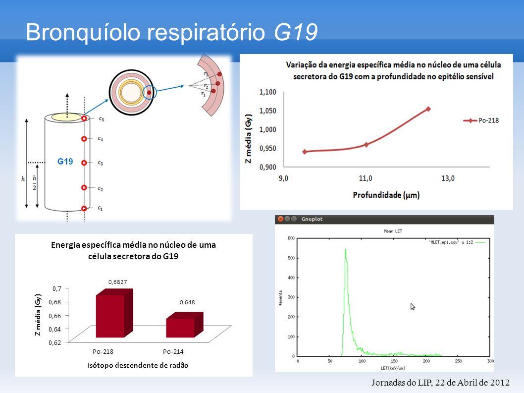 Bronquíolo respiratório G19