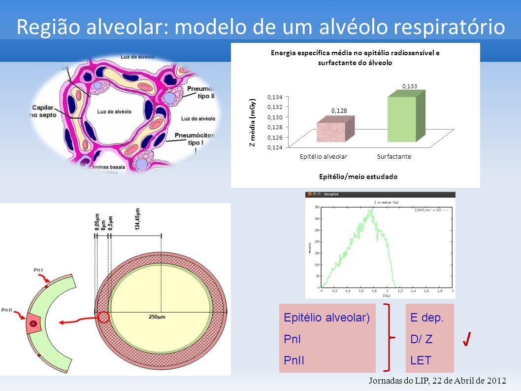 Região alveolar: modelo de um alvéolo respiratório