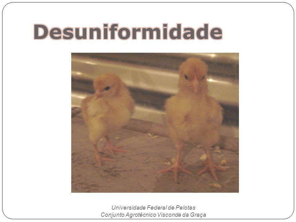Desuniformidade Universidade Federal de Pelotas