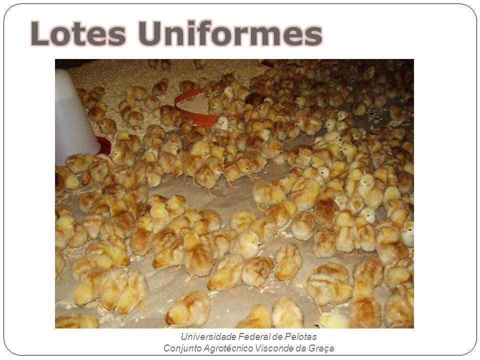 Lotes Uniformes Universidade Federal de Pelotas