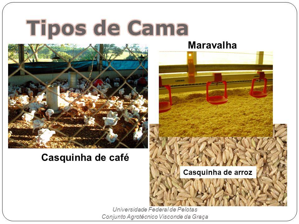 Tipos de Cama Maravalha Casquinha de café Casquinha de arroz