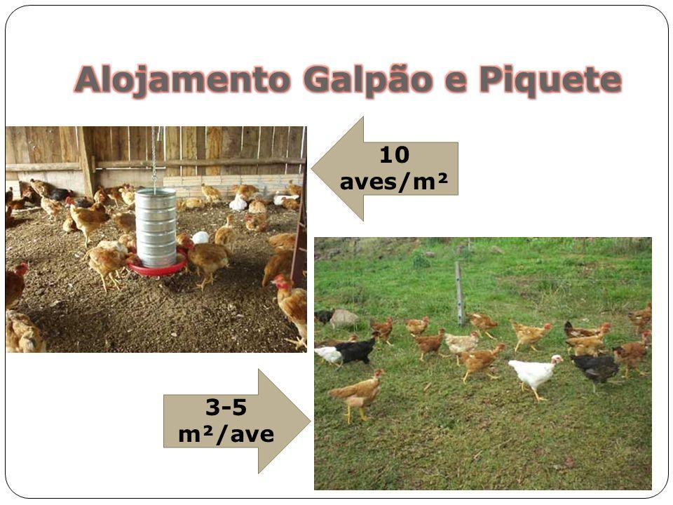 Alojamento Galpão e Piquete