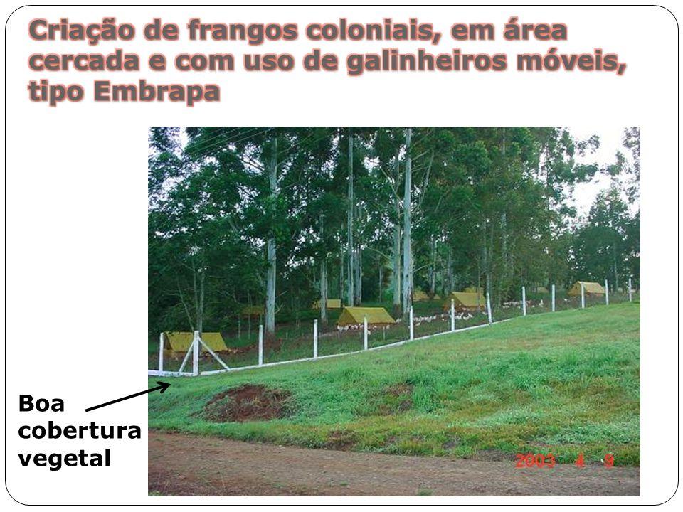 Criação de frangos coloniais, em área cercada e com uso de galinheiros móveis, tipo Embrapa