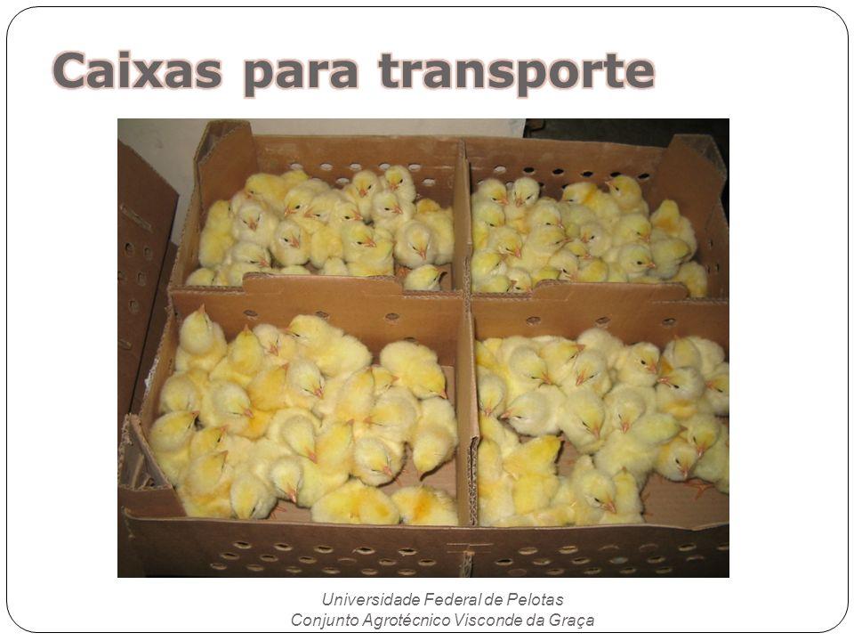 Caixas para transporte