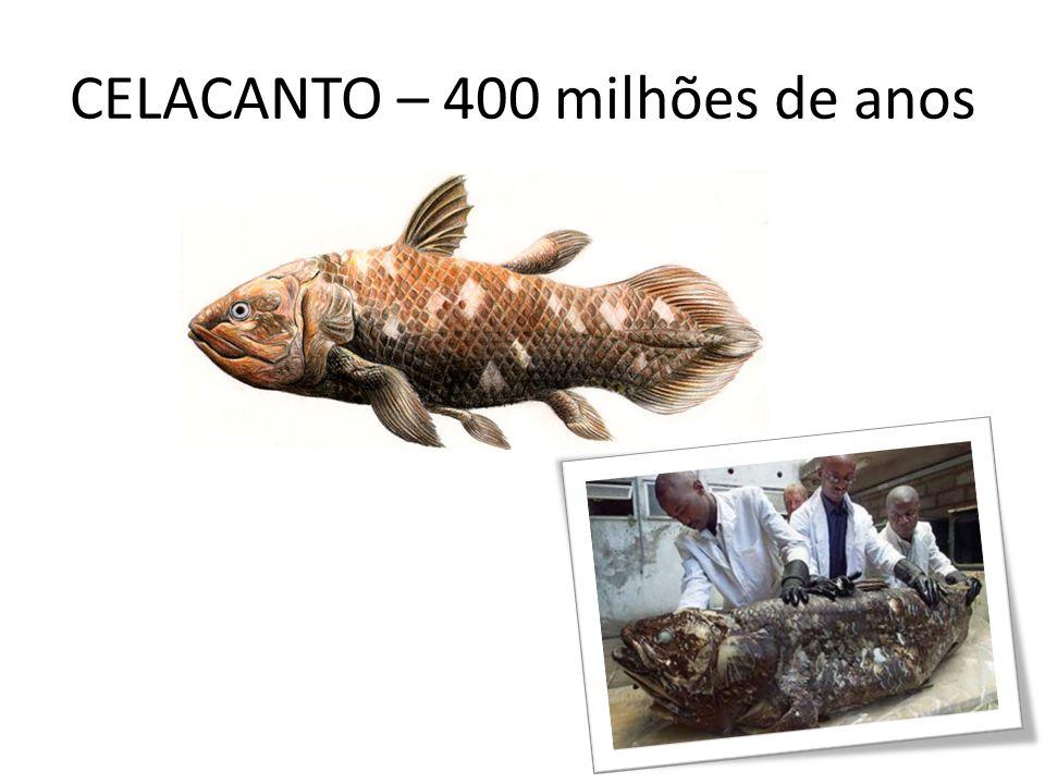 CELACANTO – 400 milhões de anos