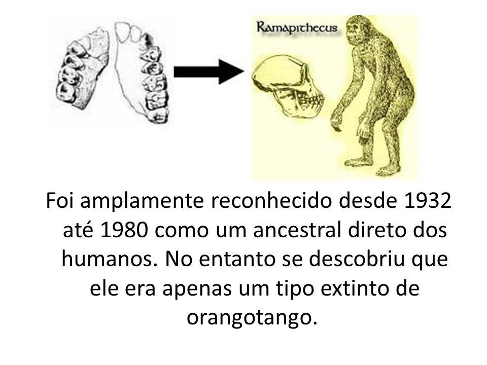 Foi amplamente reconhecido desde 1932 até 1980 como um ancestral direto dos humanos.