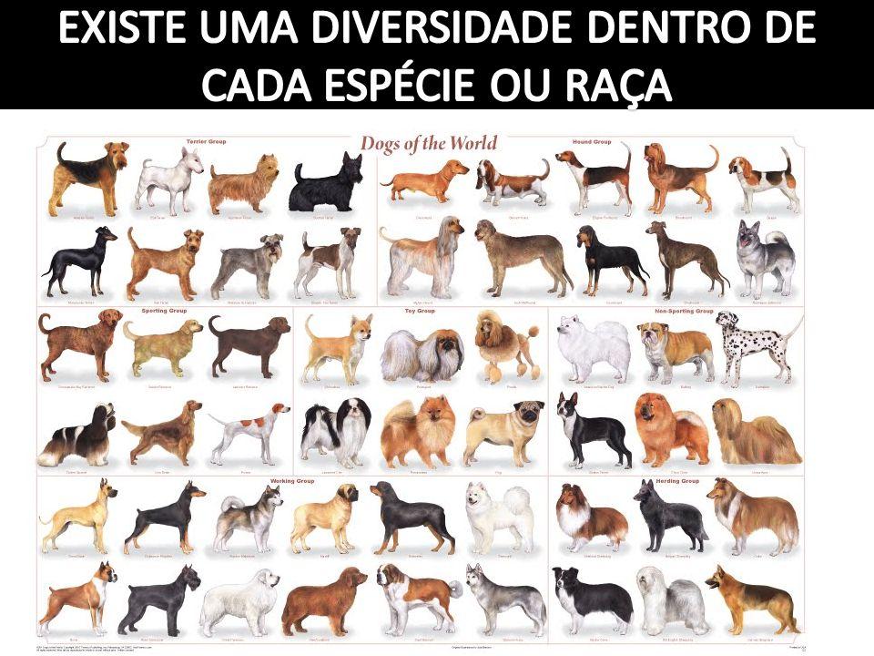 EXISTE UMA DIVERSIDADE DENTRO DE CADA ESPÉCIE OU RAÇA