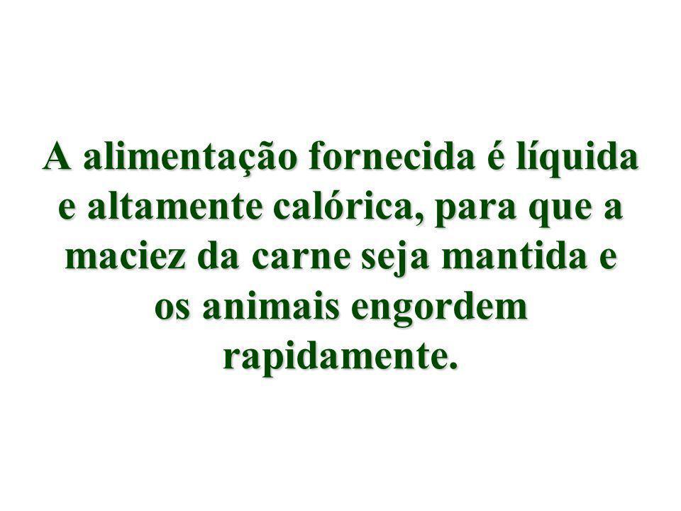 A alimentação fornecida é líquida e altamente calórica, para que a maciez da carne seja mantida e os animais engordem rapidamente.