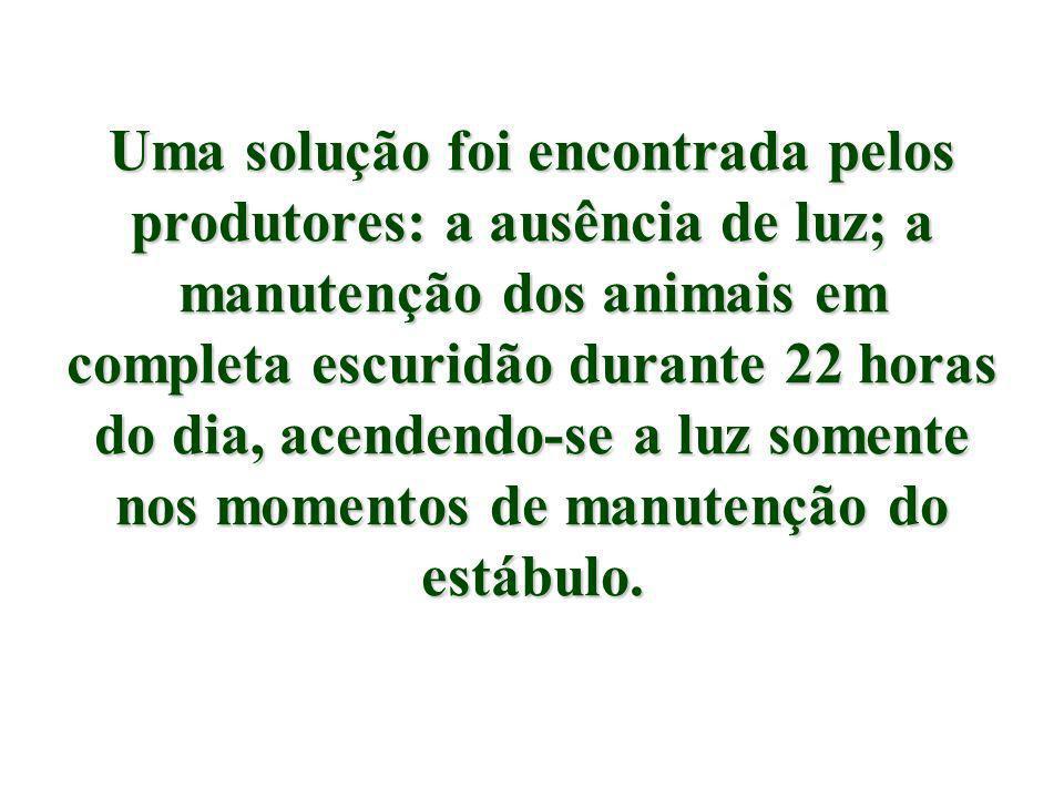 Uma solução foi encontrada pelos produtores: a ausência de luz; a manutenção dos animais em completa escuridão durante 22 horas do dia, acendendo-se a luz somente nos momentos de manutenção do estábulo.