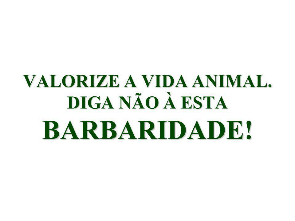 VALORIZE A VIDA ANIMAL. DIGA NÃO À ESTA BARBARIDADE!