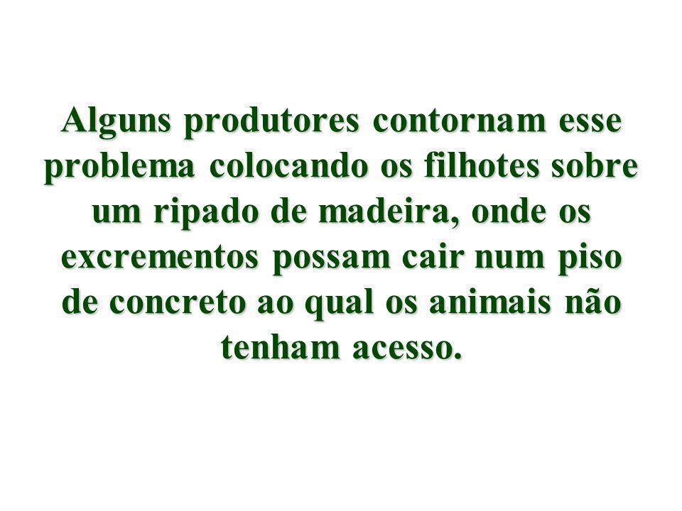 Alguns produtores contornam esse problema colocando os filhotes sobre um ripado de madeira, onde os excrementos possam cair num piso de concreto ao qual os animais não tenham acesso.