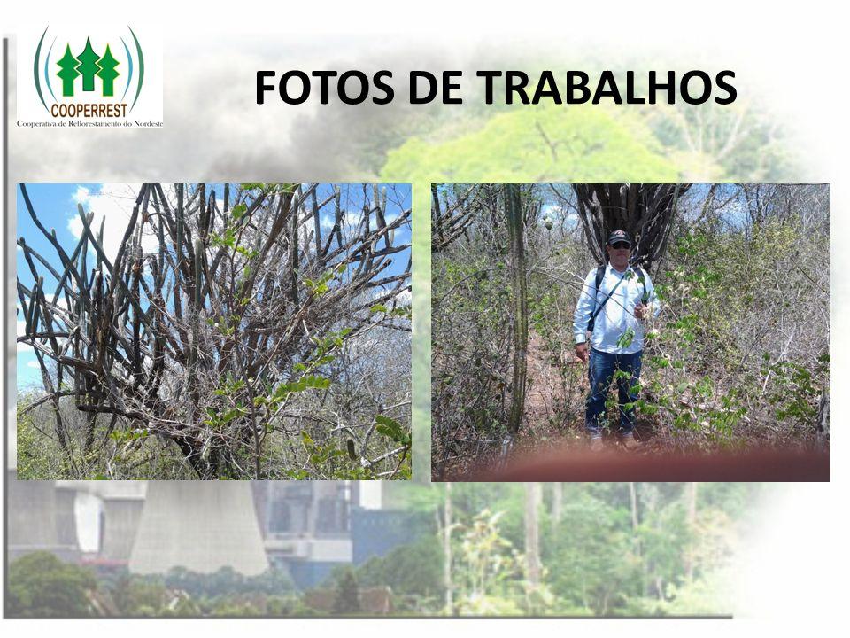 FOTOS DE TRABALHOS