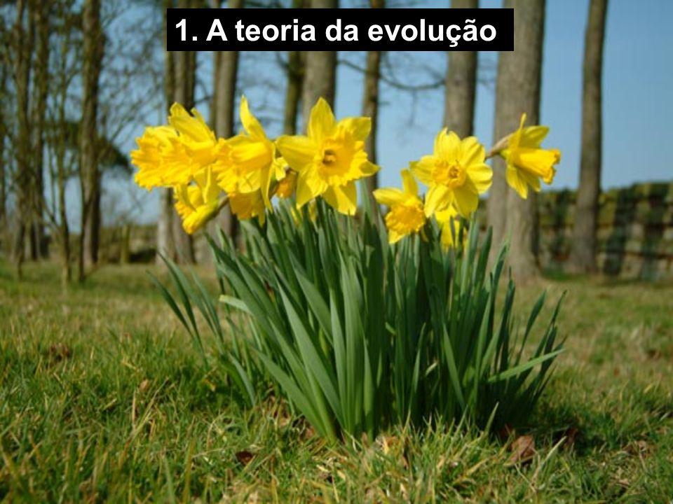1. A teoria da evolução
