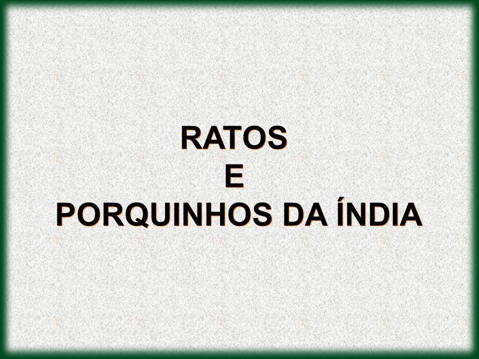 RATOS E PORQUINHOS DA ÍNDIA