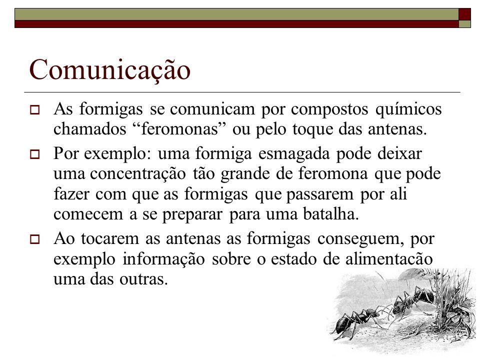 Comunicação As formigas se comunicam por compostos químicos chamados feromonas ou pelo toque das antenas.