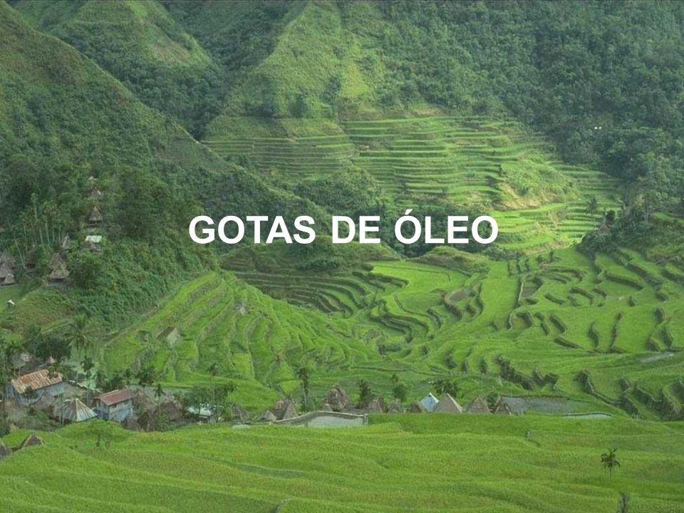 GOTAS DE ÓLEO
