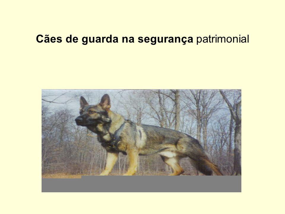 Cães de guarda na segurança patrimonial