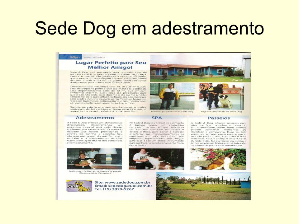 Sede Dog em adestramento