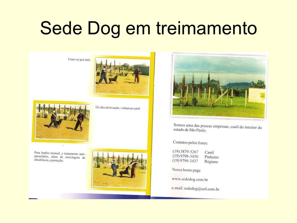 Sede Dog em treimamento