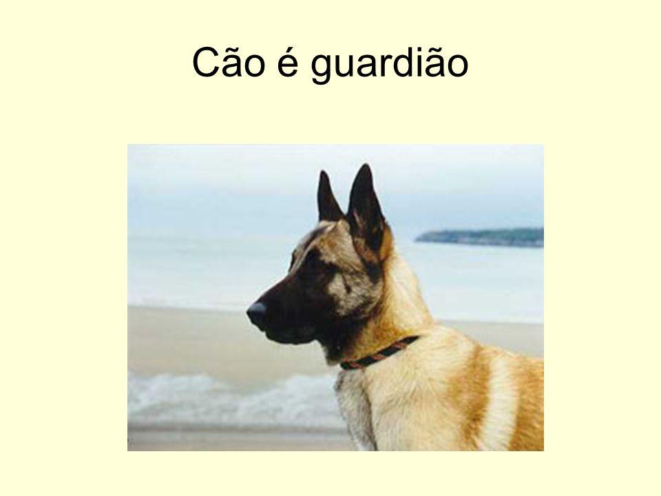 Cão é guardião