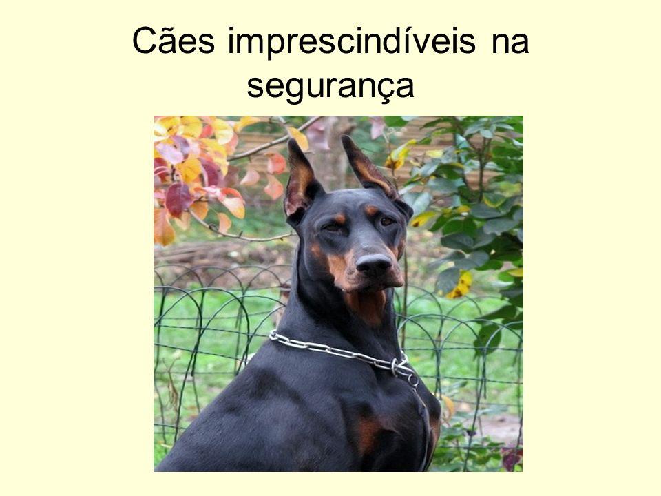 Cães imprescindíveis na segurança