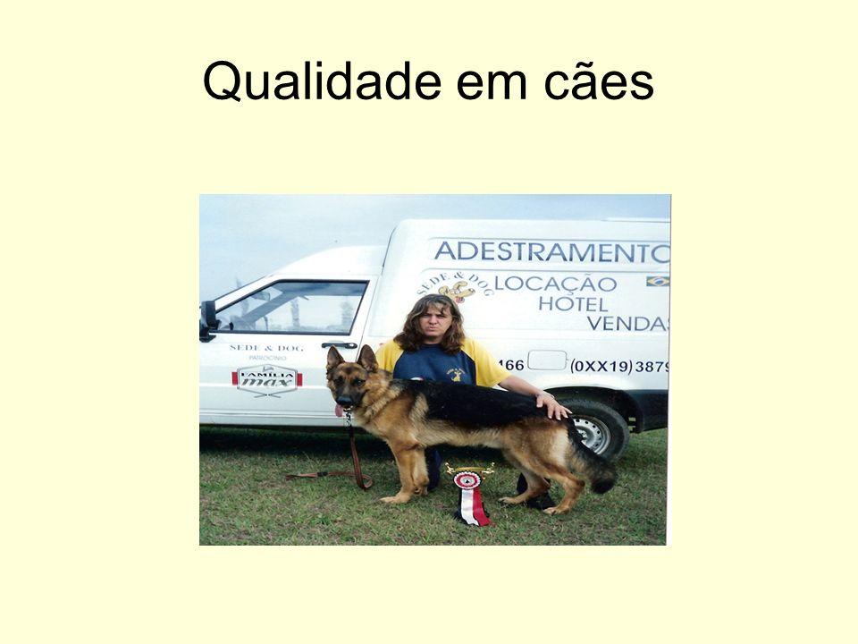 Qualidade em cães