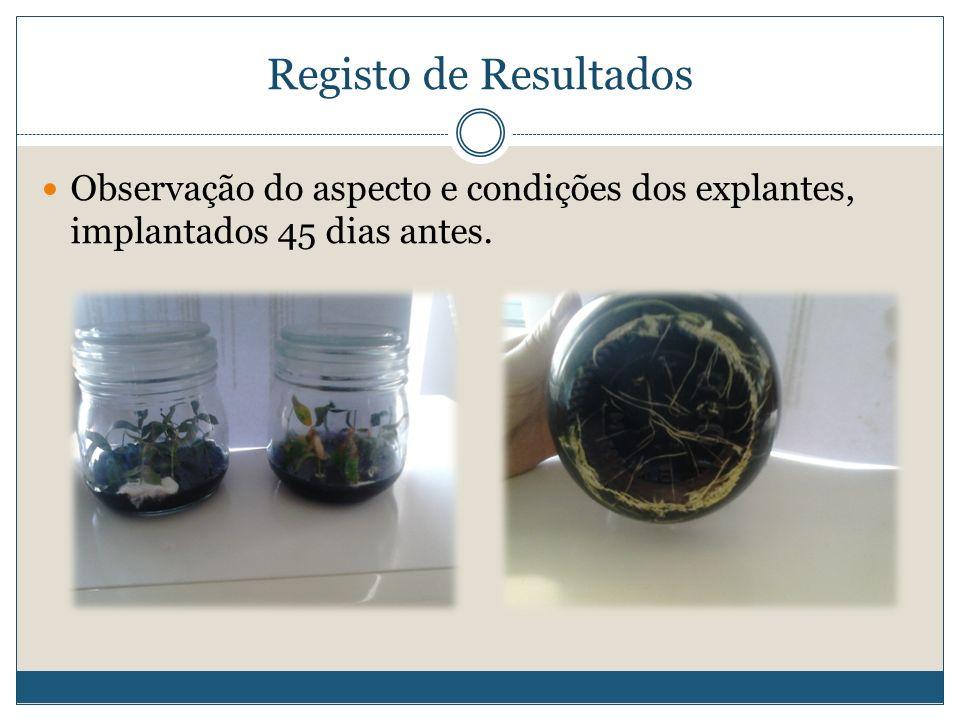 Registo de Resultados Observação do aspecto e condições dos explantes, implantados 45 dias antes.