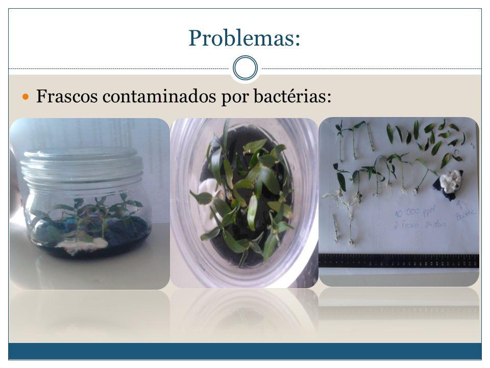 Problemas: Frascos contaminados por bactérias: