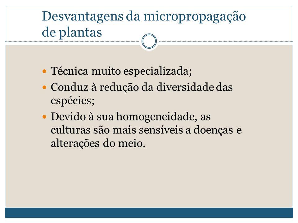 Desvantagens da micropropagação de plantas