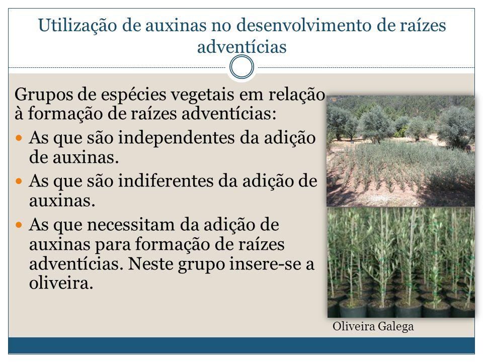 Utilização de auxinas no desenvolvimento de raízes adventícias