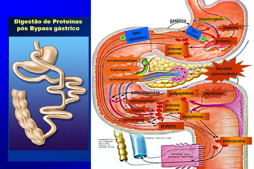 Digestão de Proteínas pós Bypass gástrico