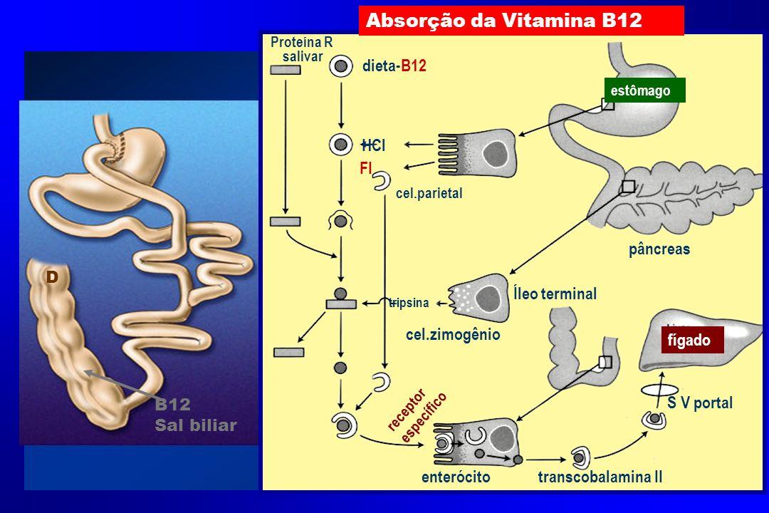 Absorção da Vitamina B12 dieta-B12 HCl FI pâncreas D Íleo terminal