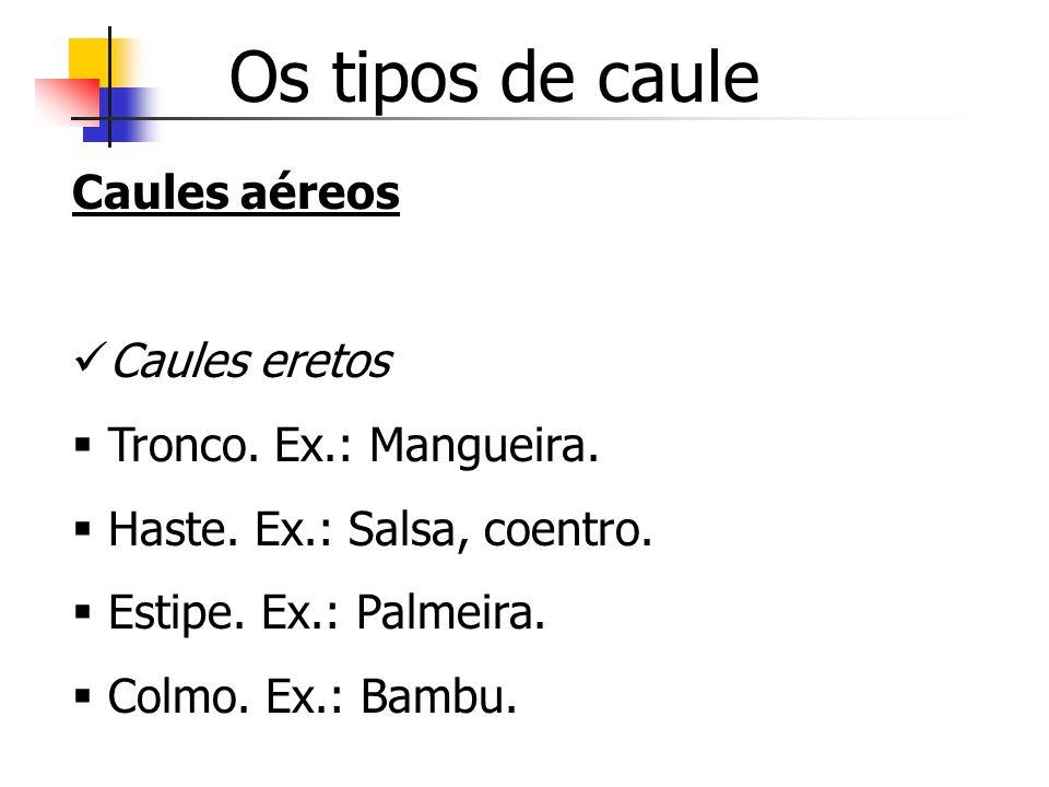 Os tipos de caule Caules aéreos Caules eretos Tronco. Ex.: Mangueira.