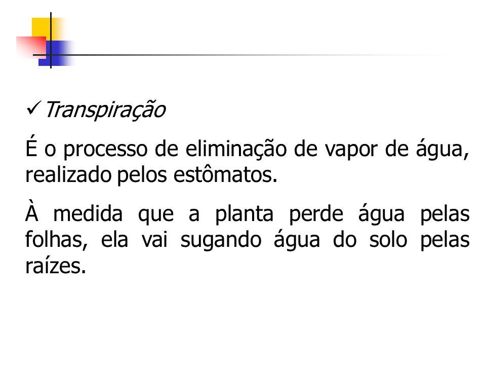 Transpiração É o processo de eliminação de vapor de água, realizado pelos estômatos.