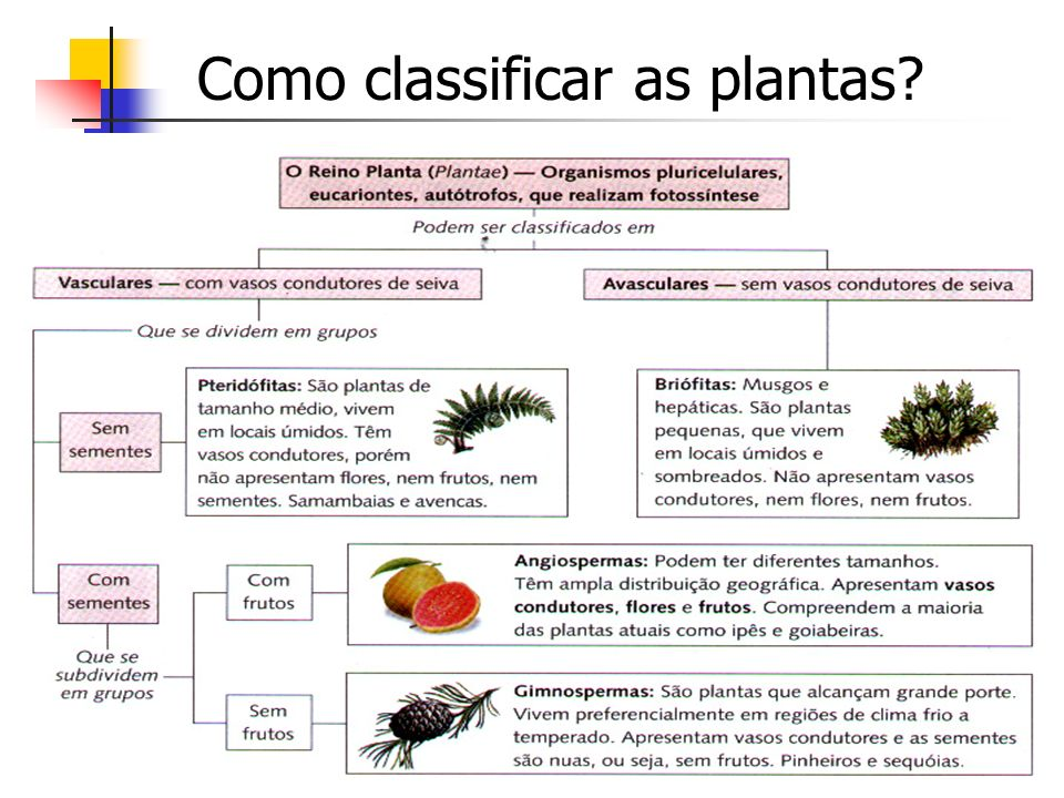Como classificar as plantas