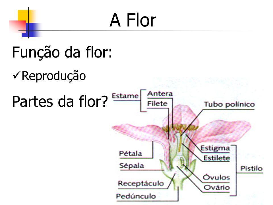 A Flor Função da flor: Reprodução Partes da flor